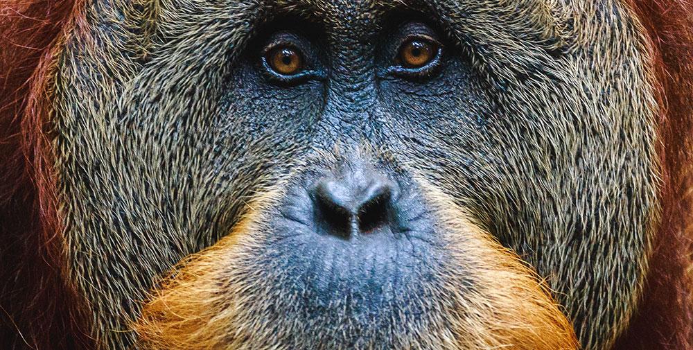猿マネは、しょせん猿マネだという話し